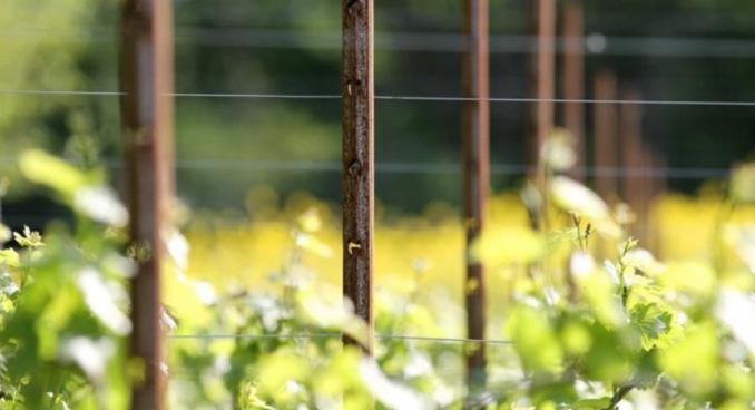 Sangoi COR-TEN szőlőoszlop